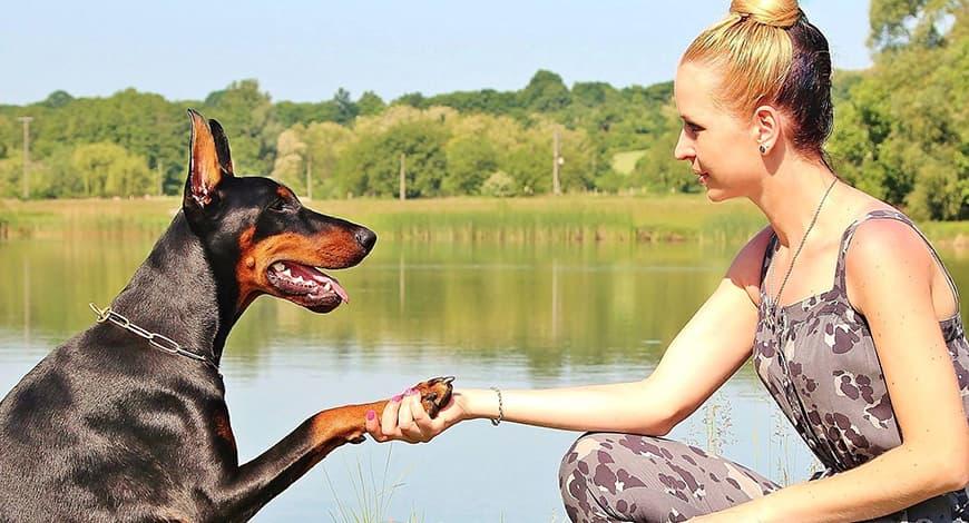 Beneficios de ejercitarte con tu perro